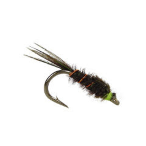 English Pheasant Tail