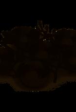 Seder plate, Michael Aram Black Orchid