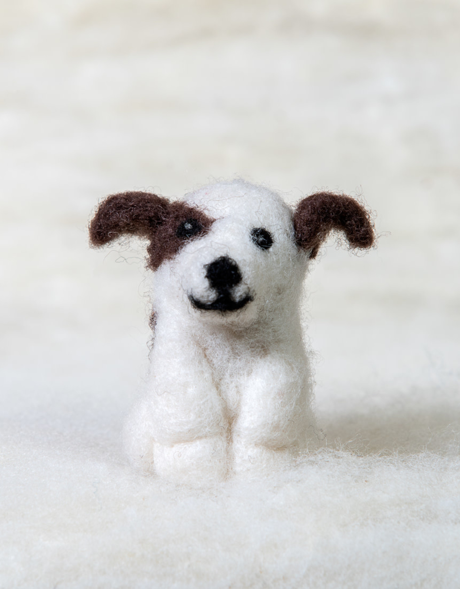 Spectacled Bear Jack Russell