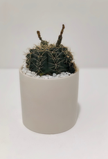 Small Cactus, May Differ Frrom Picture Shown