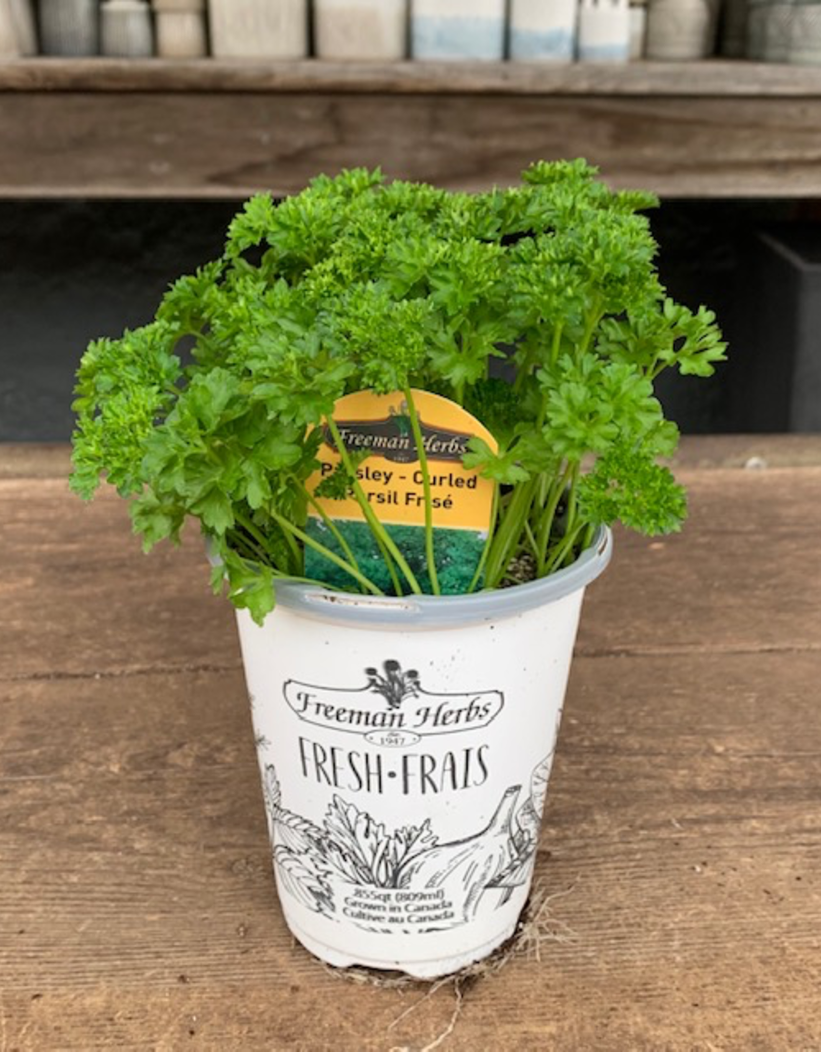 """Curled Parsley, 4"""""""