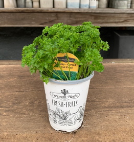 """4"""" Curled Parsley"""