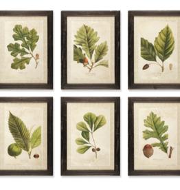 """L16.5"""" H23"""" Arborist Print"""