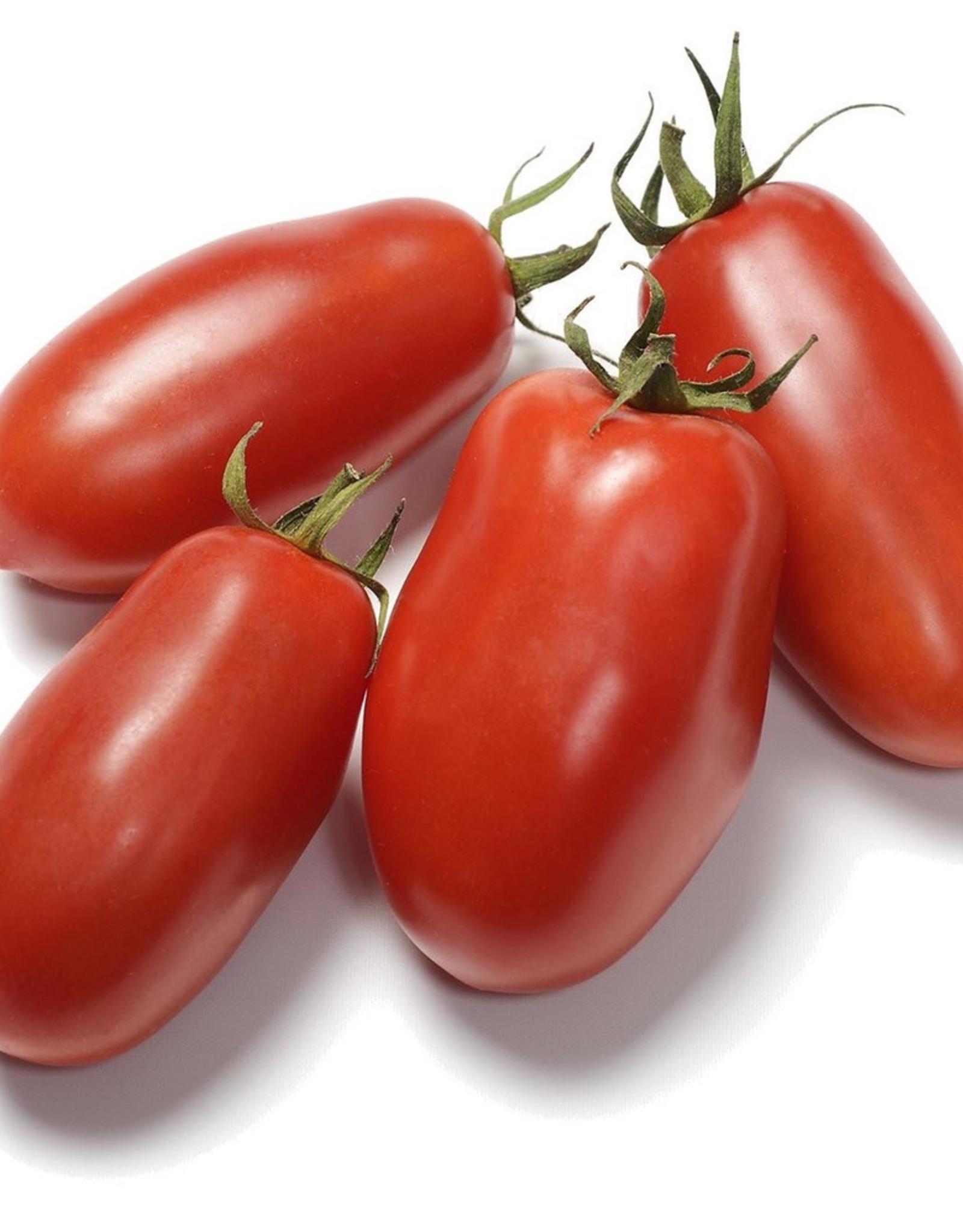 "San Marzano Tomato, 4"""