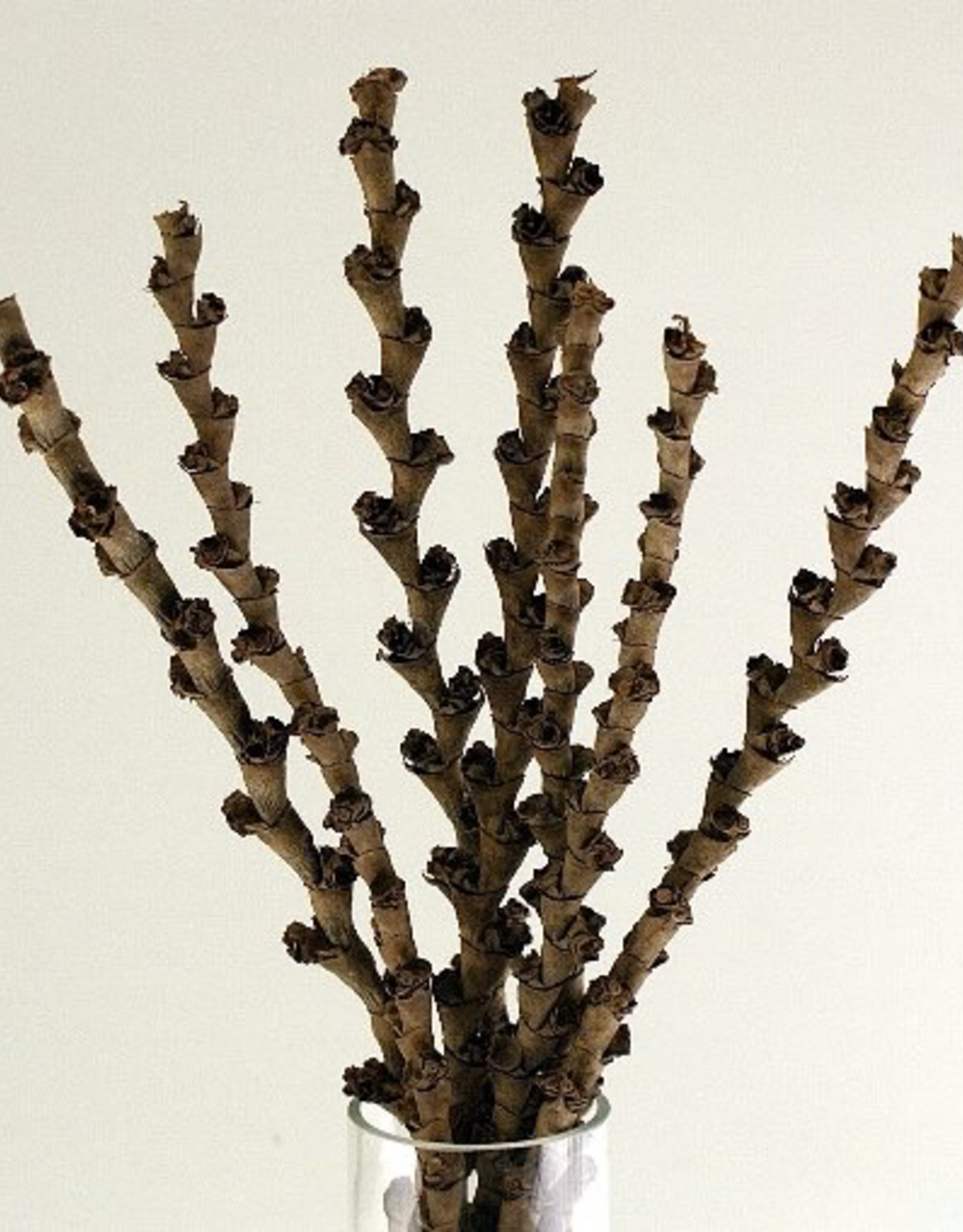 Natural Buriti Stems, 7 Stems / Pkg H16""