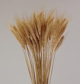 "Blonde Wheat, 50-60 Stems / Pkg, H28"""