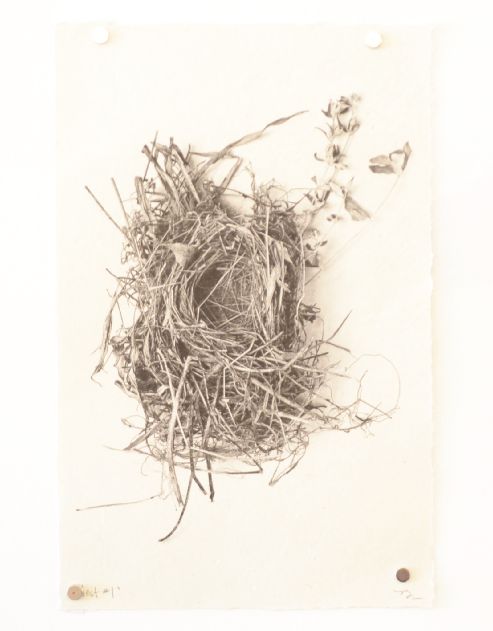 Small Nest Print