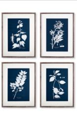 "Cyano Botanical Leaf Study Print - 6 Styles - H27.5"" L20.75"""