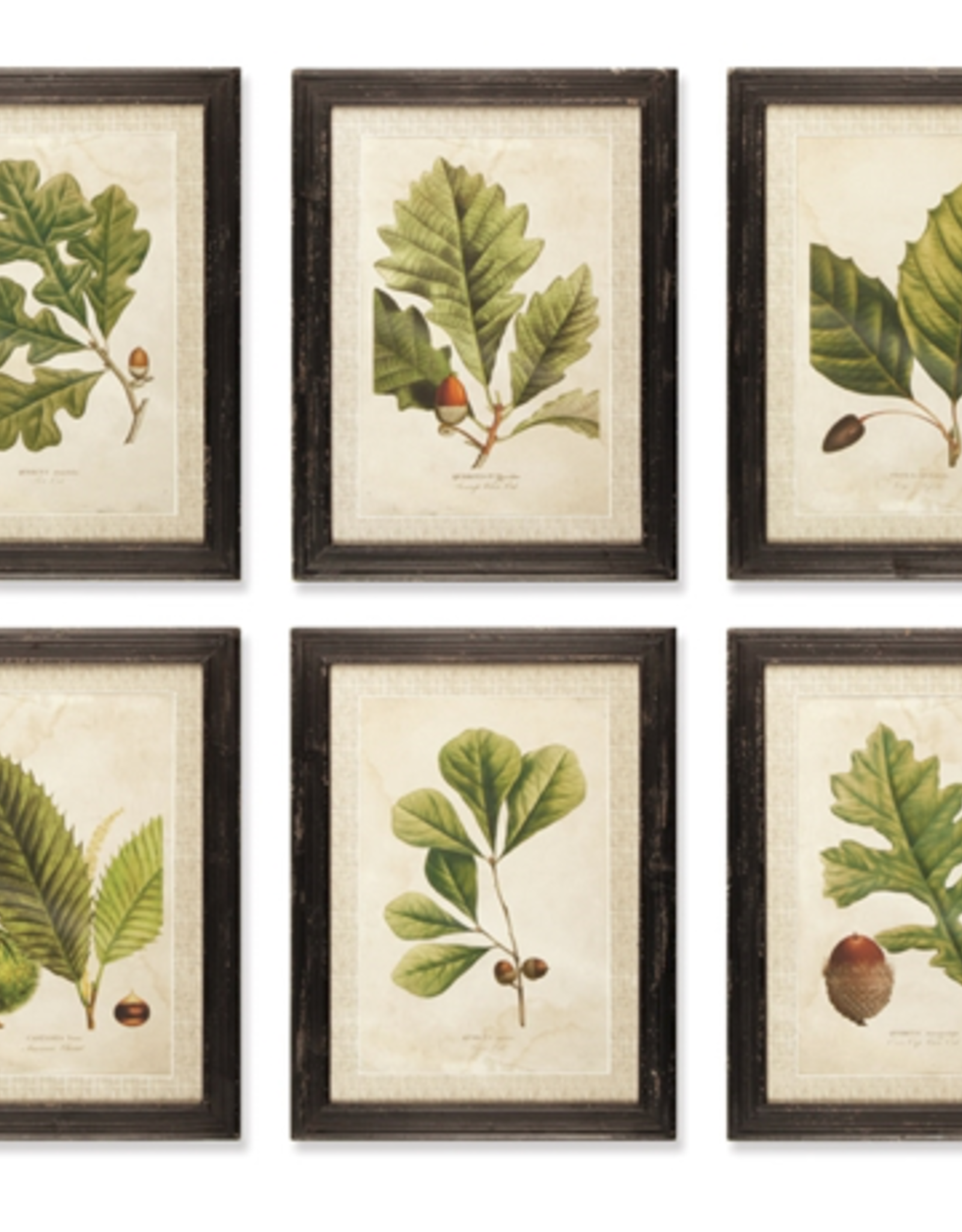 """Arborist Print, L16.5"""" H23"""""""