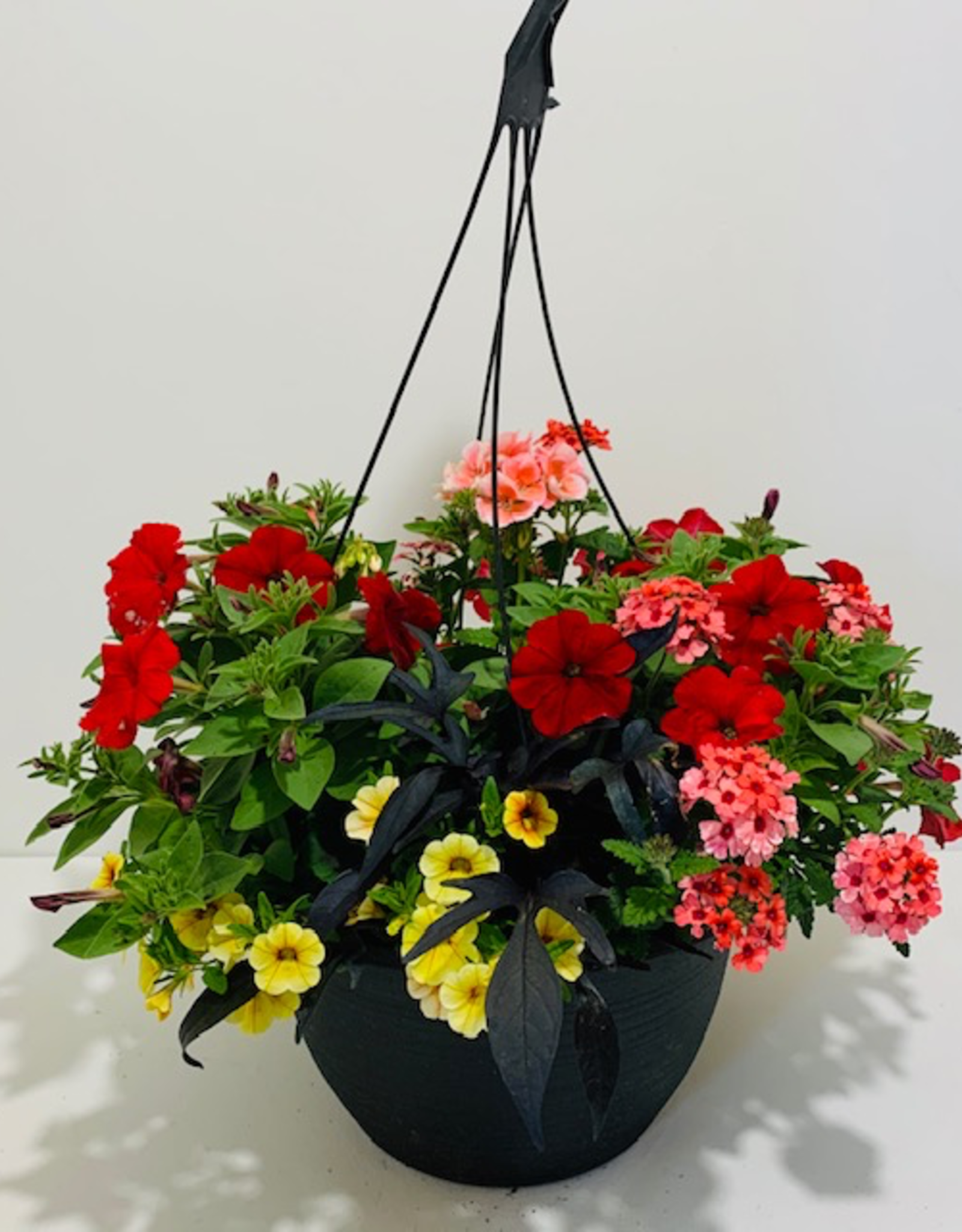 Hanging Basket, Assorted Annuals, 12""