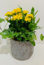 "5"" Flowering Plant Arrangement in Patterned Blue Ceramic Pot"