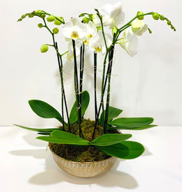 Orchid Arrangement in Gold Metal Bowl