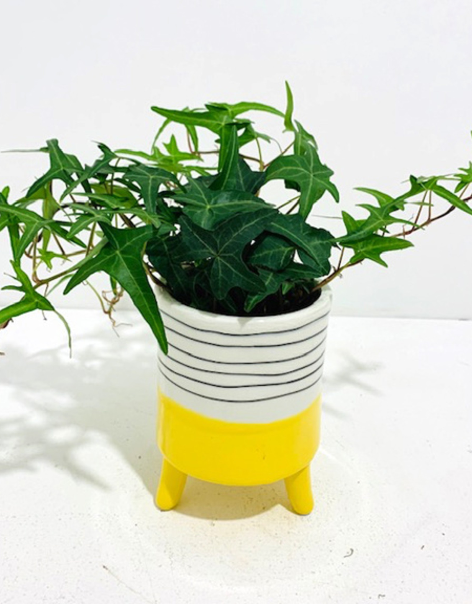 """4"""" Ivy in Yellow & White Ceramic Footed Pot"""