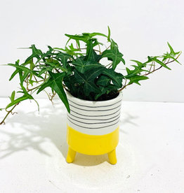 "4"" Ivy in Yellow & White Ceramic Footed Pot"