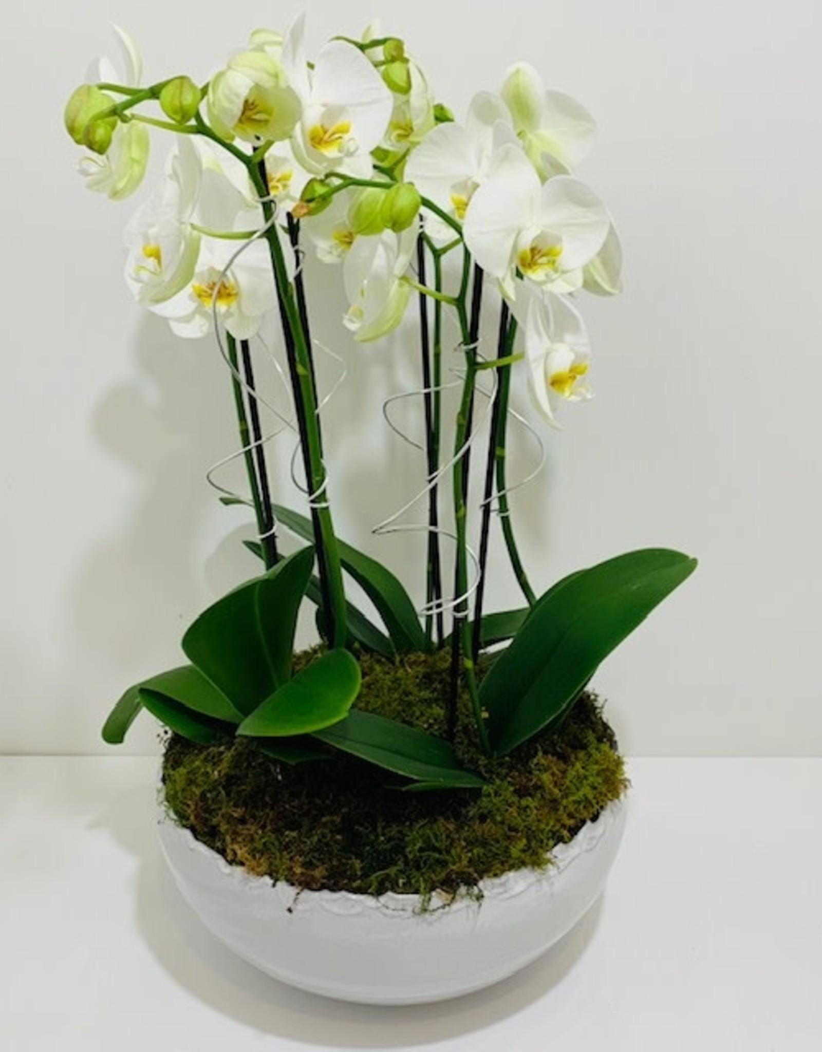Orchid Arrangement in White Ceramic Bowl