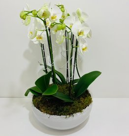 Orchid Arrangement in White Ceramic Bowl