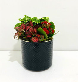 "Holiday Arrangement in 5"" Black Ceramic Container"