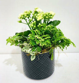 "Holiday Arrangement in 6"" Black Ceramic Container"