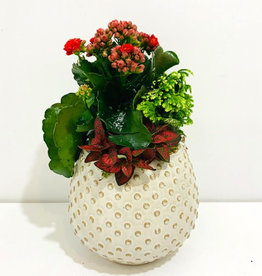 "Holiday Arrangement in 6"" Off-White Container"