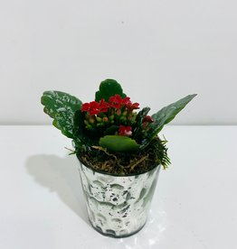 "2"" Mini Kalanchoe in Votive"