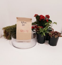 "Holiday Arrangement Planting Kit in 8"" Glass Bowl"