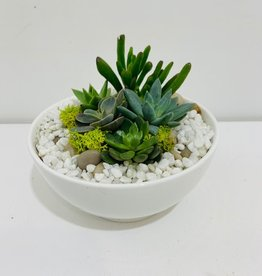 "Succulent Arrangement in 5"" White Ceramic Bowl"