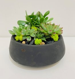 "Succulent Arrangement in 7"" Black Cement Bowl"