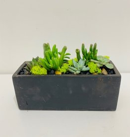 "Succulent Arrangement in 8"" Black Cement Container"
