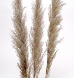 "45"" Grey Pampas Grass, 3 stems / Bunch"