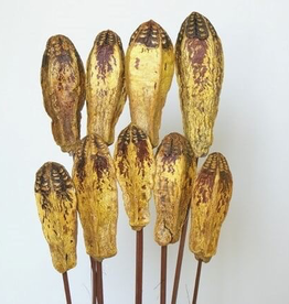 "Mahogany Pods, Yellow, 4"" Pod, 9 Stems"