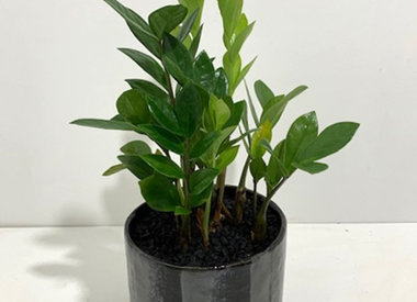 House Plant Arrangements