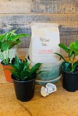 House Plant Kit + Geode
