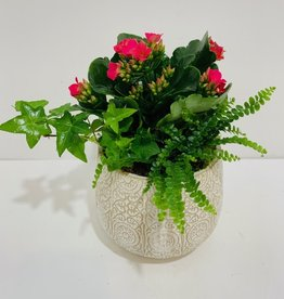 "5"" Flowering Plant Arrangement in Embossed Ceramic Planter"