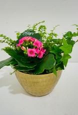 "5"" Flowering Plant Arrangement in Gold Bowl"