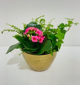 "5"" Flowering Plant Arrangement in Gold Bowl"