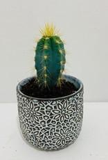"2"" Blue Cactus in Patterned Ceramic Container"