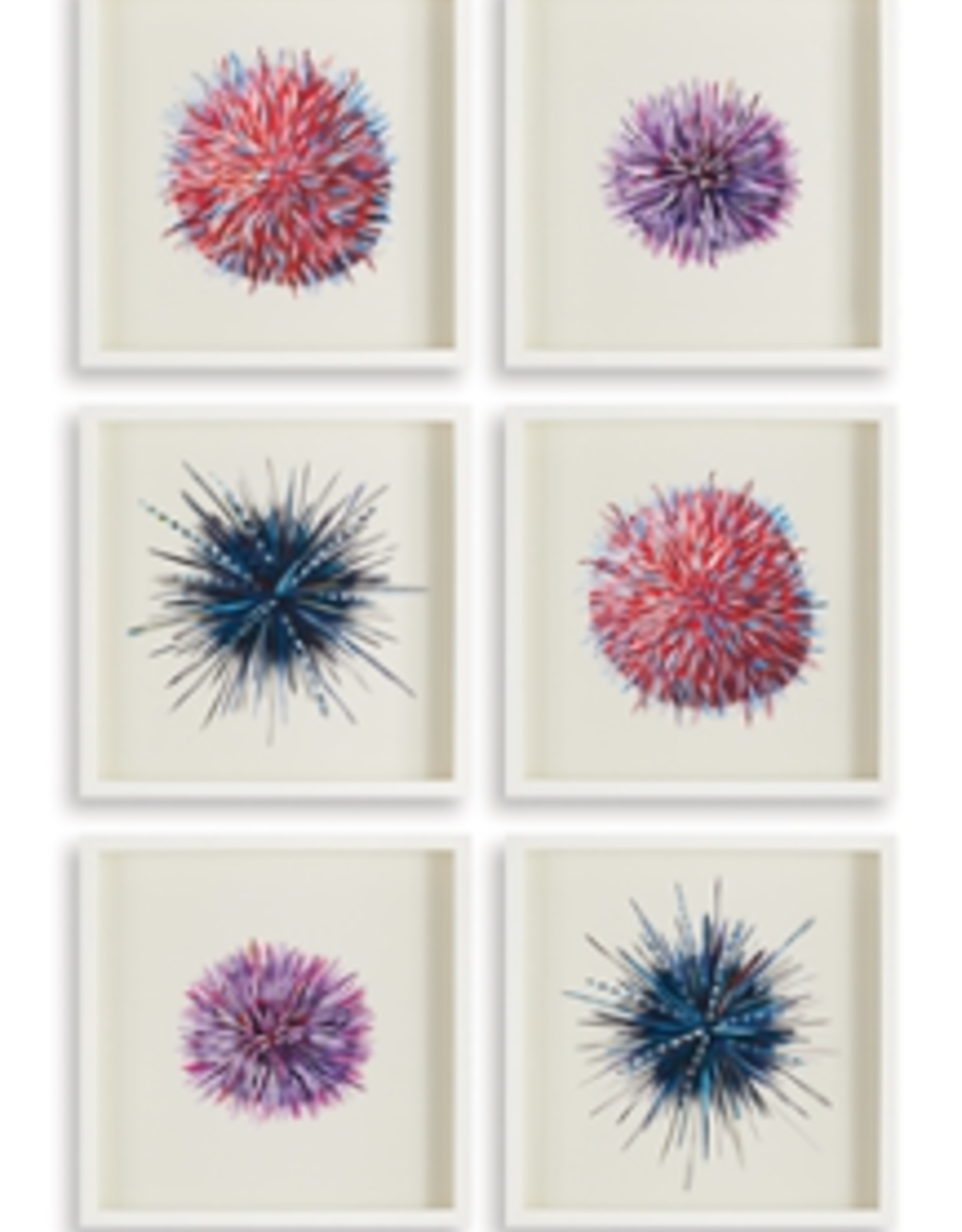 Sea Urchin Print  - 6 Assorted Styles