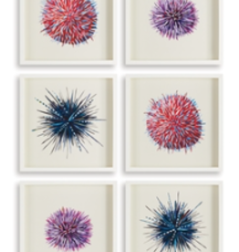 Sea Urchin Print  - 6 Assorted Styles