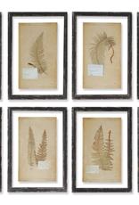 Vintage Fern Print - 8 Assorted