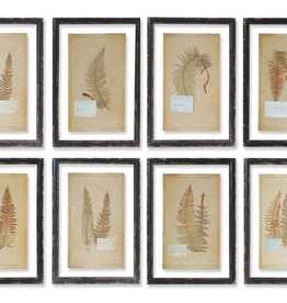 Vintage Fern Print - 8 Assorted