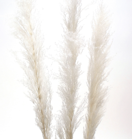 "60"" White Pampas Grass, 3 Stems / Bunch"