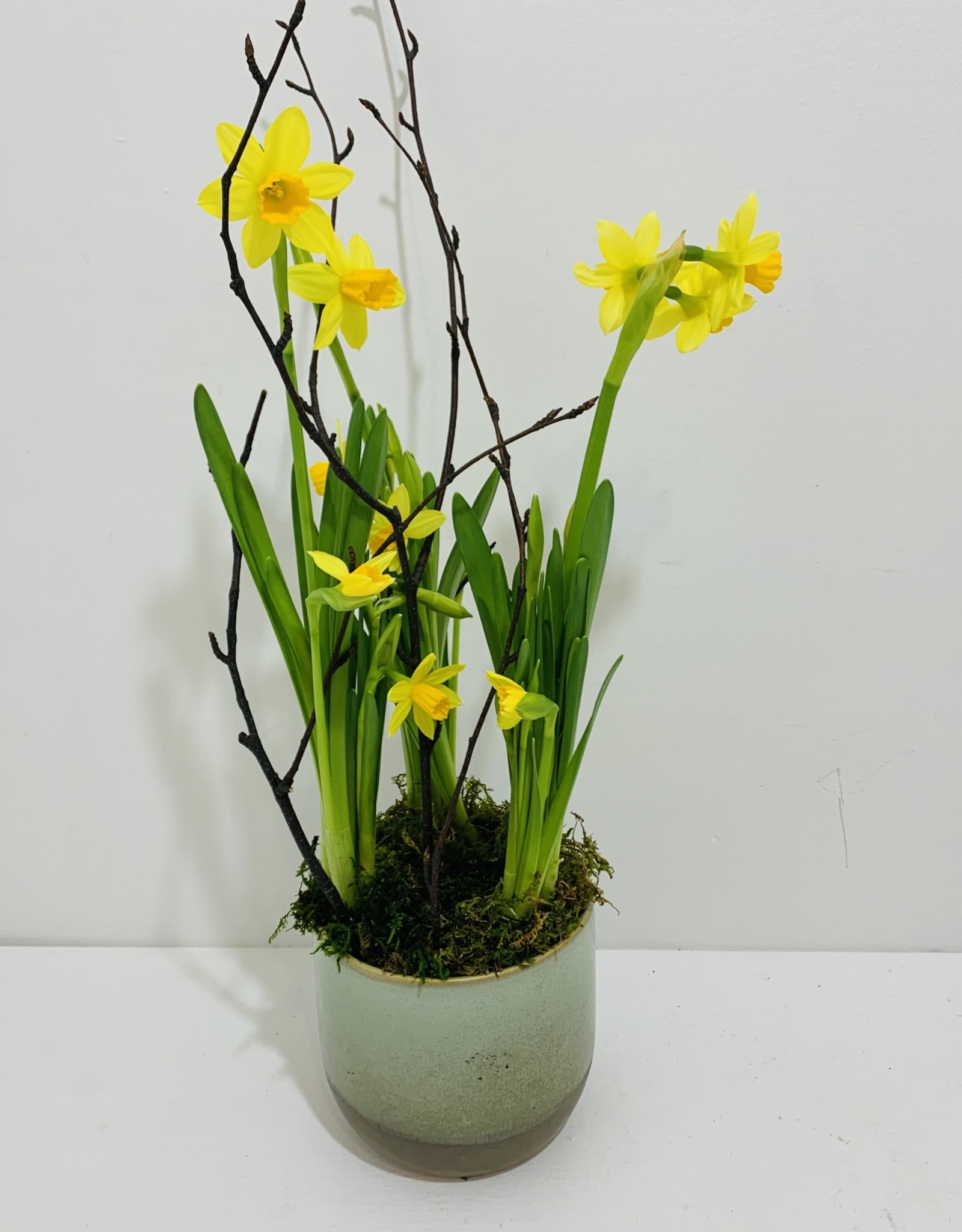 "4"" Daffodil in Green Ceramic Container"