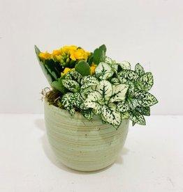 """4"""" Flowering Plant Arrangement in Green Ceramic Container"""
