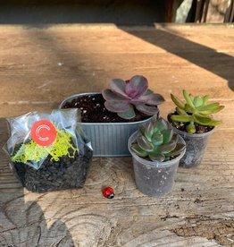 Spring Break Succulent Kit