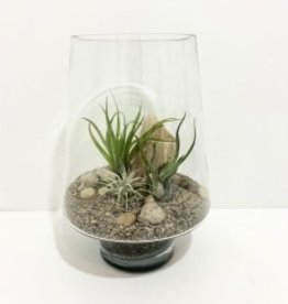 "Air Plant Arrangement in 10"" Glass Container"