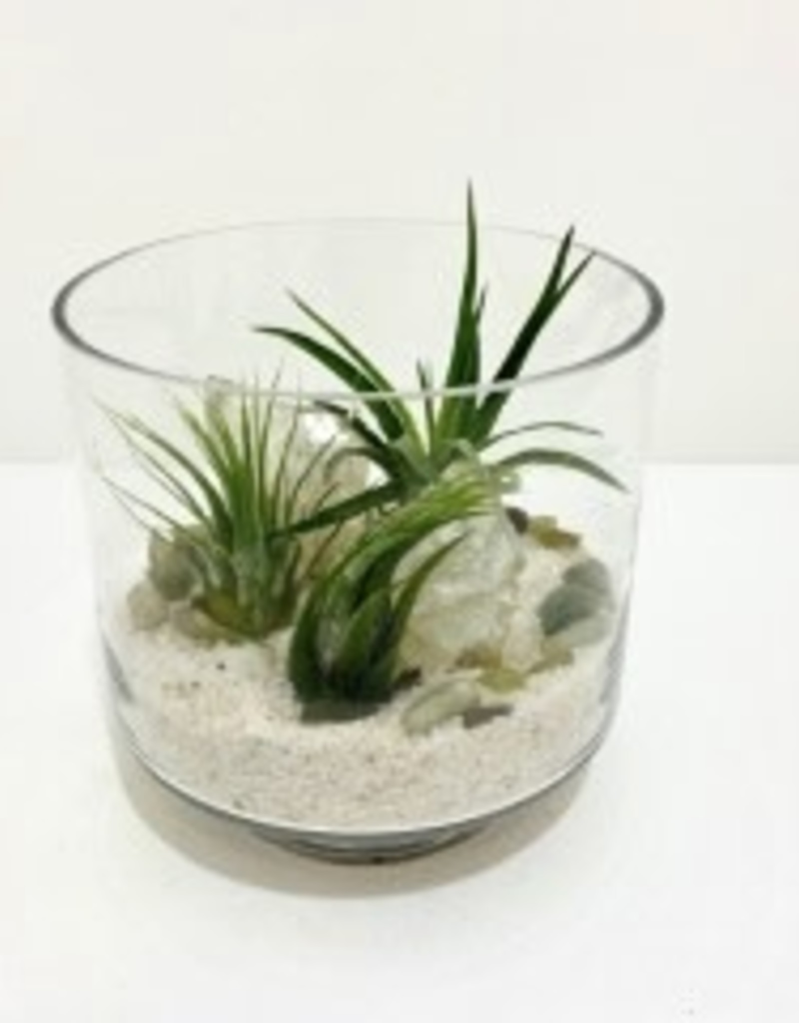 Air Plant Arrangement in Glass Vessel
