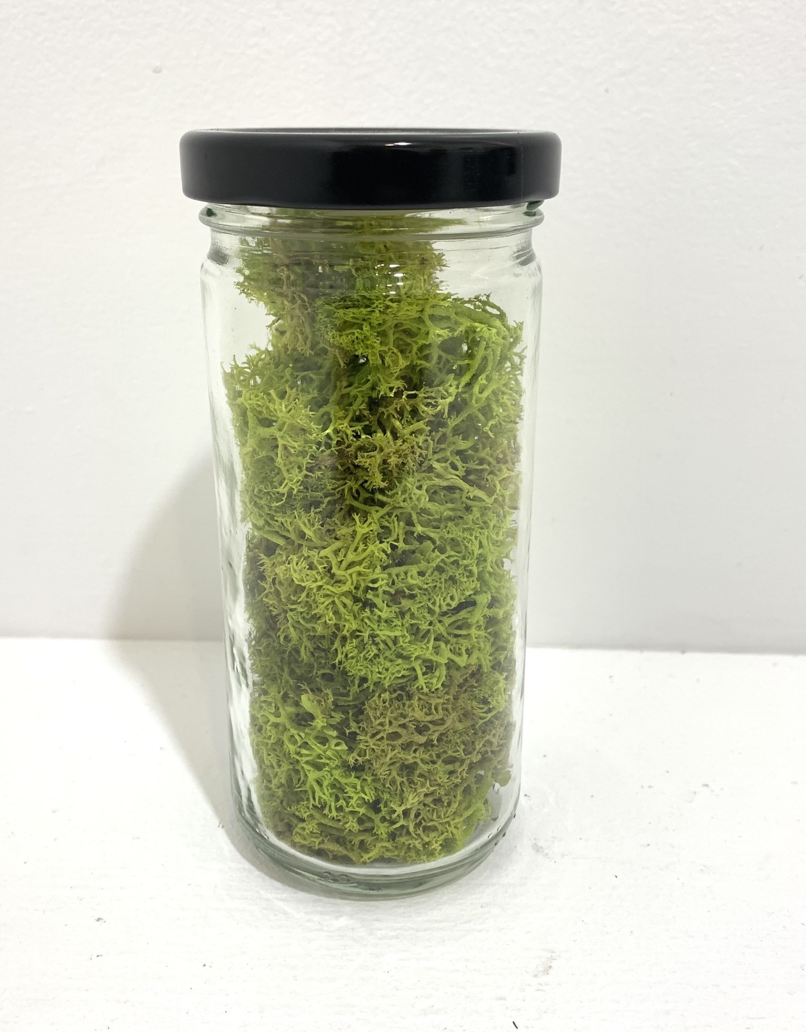 8oz Lime Moss in Glass Jar
