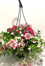"10"" Pink & White Hanging Basket"