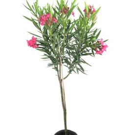 """Oleander Standard 10"""""""