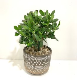 "8"" Jade in Carmine Pot"